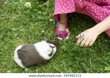 Child Girl relaxing and playing with her guinea pigs outside on green grass lawn, garden, countryside,  summer, pets, animals