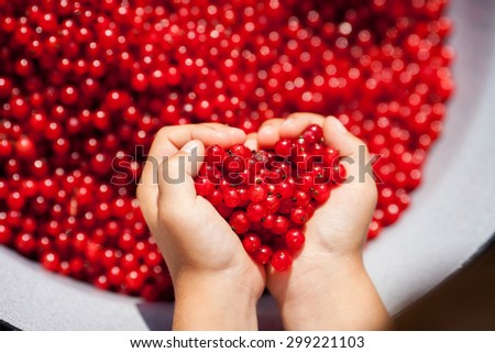 Child hands, holding red currants in the shape of heart, summertime