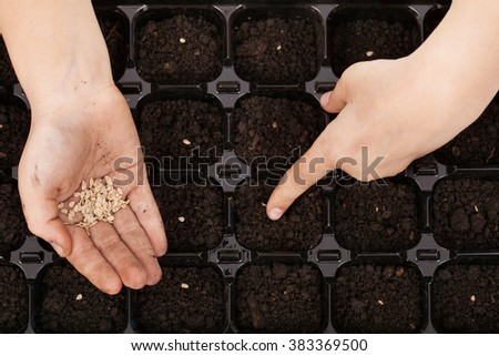Child hands putting tomato seeds into fertile soil in germination tray