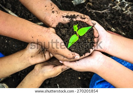 child holding young plant in hands . Ecology concept - stock photo