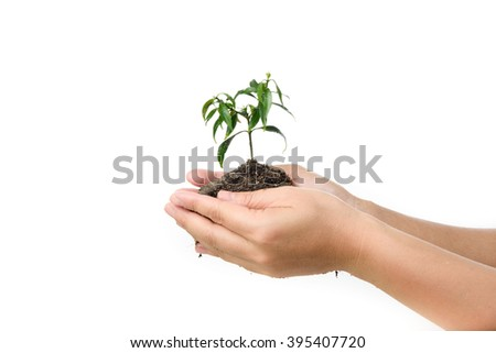 Child holding young seedling plant in hands plant on soil. Concept Earth day