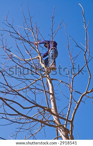 Child is climbing at top of the tree against blue sky - stock photo