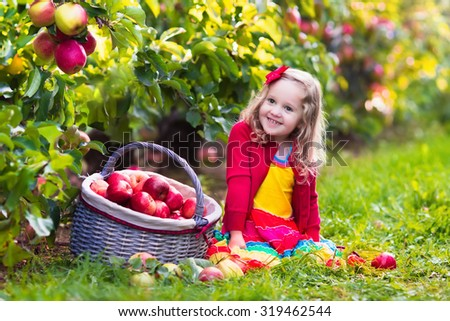 Child picking apples on a farm in autumn. Little girl playing in apple tree orchard. Kids pick fruit in a basket. Toddler eating fruits at fall harvest. Outdoor fun for children. Healthy nutrition. - stock photo