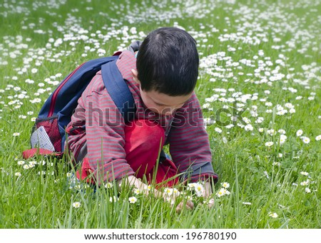 Child picking wild daisy flowers on a lawn or meadow. - stock photo