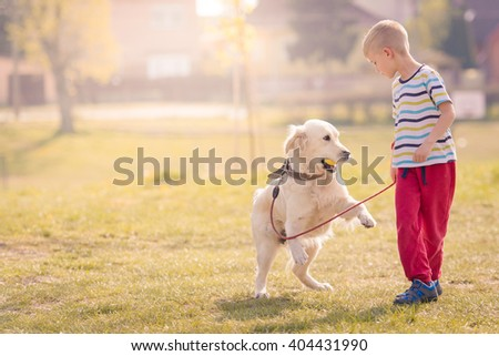 Child playing with Labrador Dog Golden Retriever in Park - stock photo