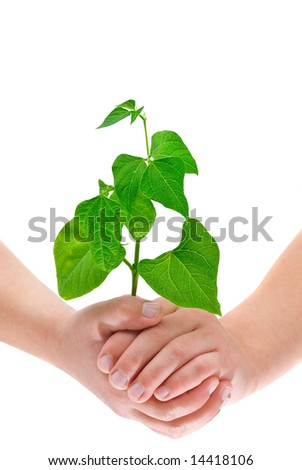 Child's hands holding a growing small plant, isolated on white background - stock photo