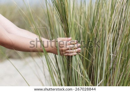 Child's hands holding blades of beach grass - stock photo