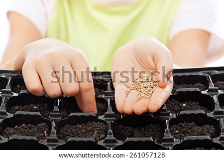 Child sowing seeds into germination tray - closeup on hands - stock photo