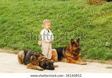 Child stands between the two sheepdogs. - stock photo