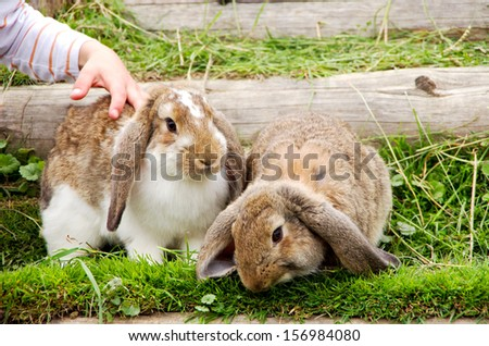 child stroking a rabbit in a - stock photo