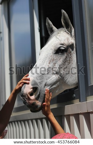 Child stroking the horse, horse looking from stable