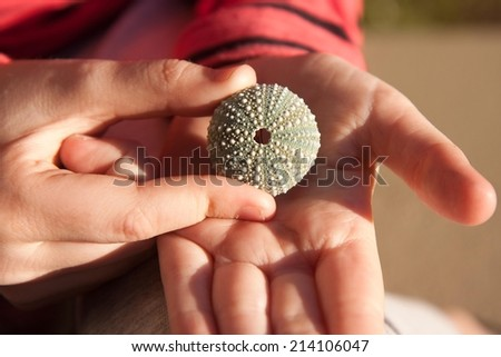child using pincer grip to hold a small, delicate sea egg shell