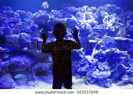 Child watching reef fish in a large Aquarium - stock photo