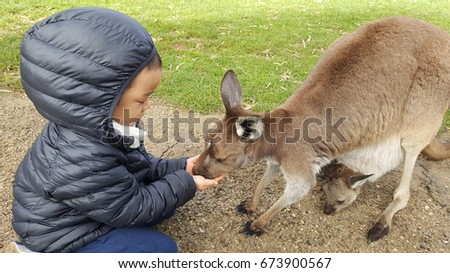 "Child with mother and baby kangaroo in wildlife park. Kangaroo is a marsupial from the family Macropodidae (macropods, meaning ""large foot"")."