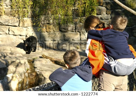 Children at the Zoo looking at a Bear
