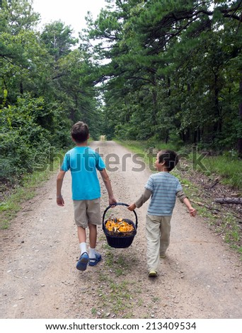 Children drop out of the woods along the road with a heavy basket full of mushrooms - chanterelles - stock photo