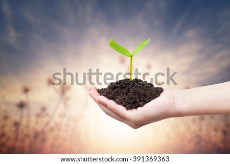 Children hands holding a green young plant on warm tone background