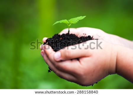Children hands holding a green young plant. Selective focus. - stock photo