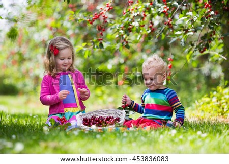 Children picking cherries in summer orchard.