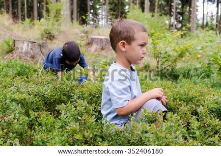 Children picking wild blueberries in a blueberry  forest - stock photo