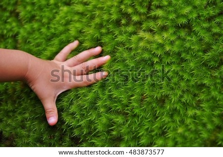 Children's hand to touch the bushy of moss