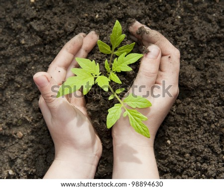 children's hands and little plant - stock photo