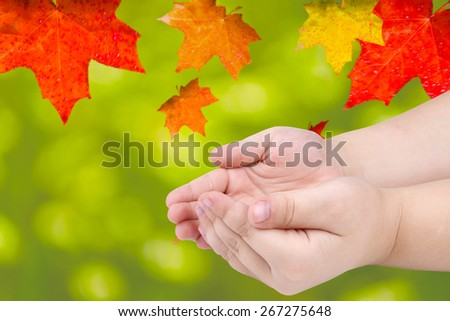 children's hands on a background of autumn leaves - stock photo