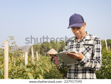 Chili farmers on working - stock photo