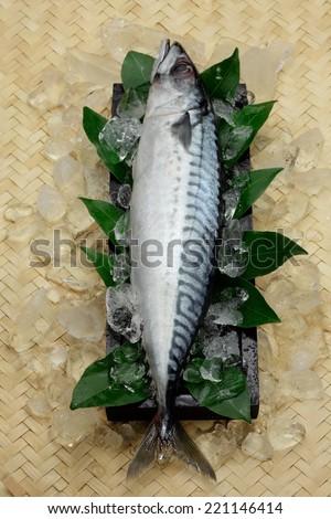 Chilled Iceland mackerel on ice - stock photo