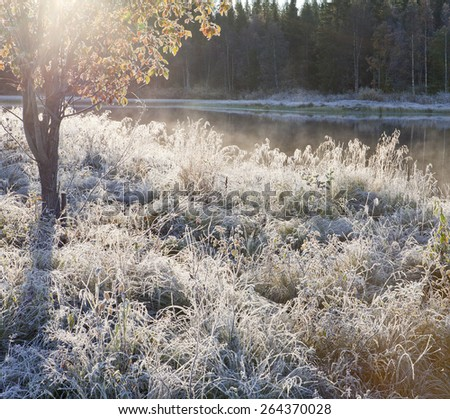 Chilly morning, rime and frost in the grass. Mist from the river. Bright sunshine in the bush. - stock photo