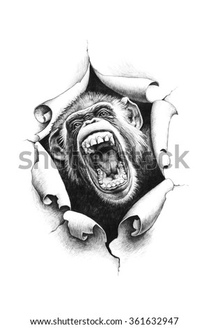 Chimpanzee with open mouth breaks through the paper. The idea for tattoo and printing on t-shirts. Pencil drawing illustration.