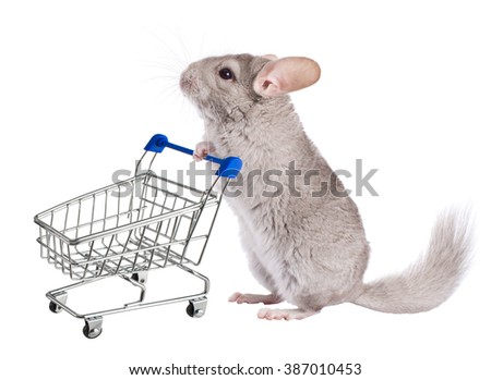 Chinchilla with shopping trolley . Series of isolated images.