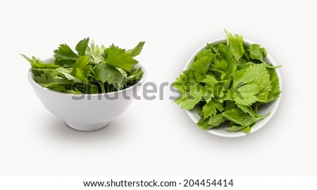 Chinese celery isolated on white background, view from front and top. - stock photo