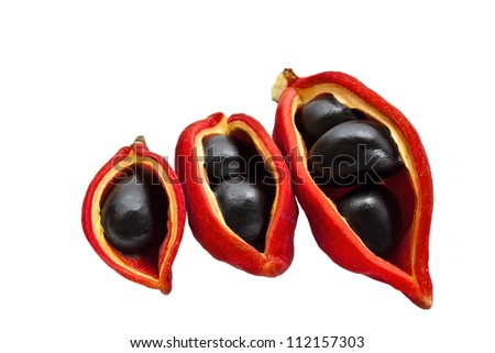 Chinese chestnut  on white background