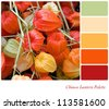 Chinese Lantern plant background colour palette with complimentary swatches. - stock photo