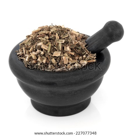 Chinese motherwort herb used in herbal medicine in a marble mortar with pestle over white background. Yi mu cao. - stock photo