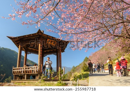 chinese pavilion in a park with cherry blossom - stock photo