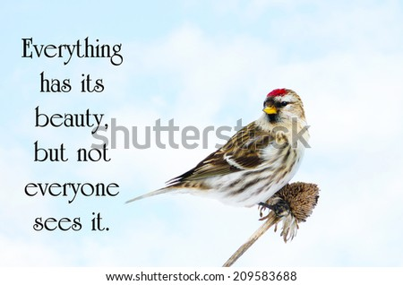 Chinese proverb about beauty in nature, with a pretty male common redpoll bird perched on a dead daisy stalk, eating seeds in the winter. - stock photo