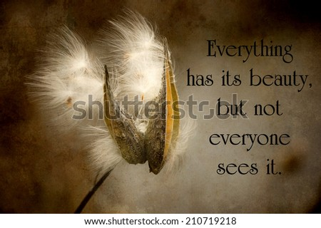 Chinese proverb about beauty in nature, with a pretty milkweed pod with seed blowing in the wind in autumn, grunge textured. - stock photo