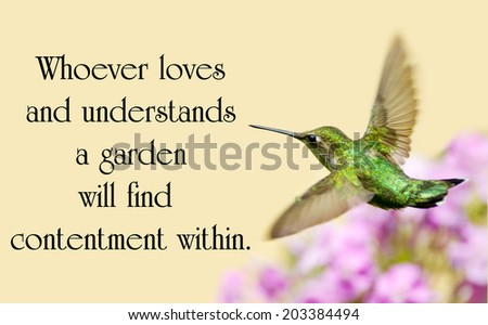 Chinese proverb about nature with a beautiful ruby throated hummingbird in motion in the garden - stock photo