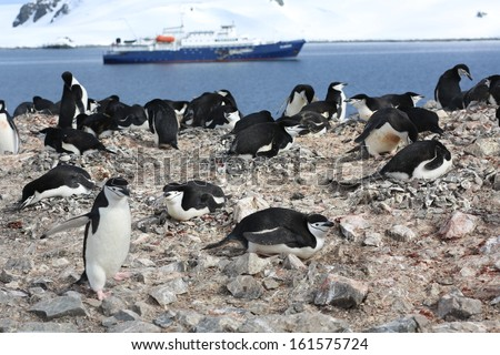 Chinstrap penguin (Pygoscelis antarctica) rookery in Antarctica, with a cruise ship in the background - stock photo
