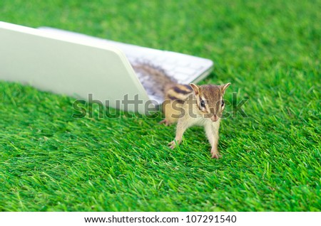 Chipmunk and Laptop