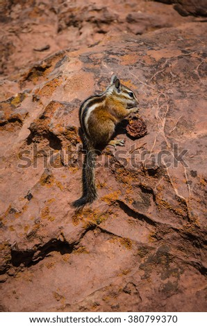Chipmunk eating pit from peach in Zion National Park, Utah. - stock photo