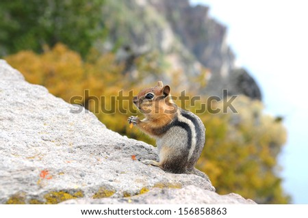 Chipmunk eats chip on the rock at Crater Lake