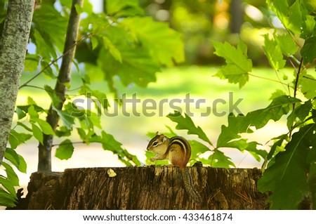 Chipmunk sitting on a stump, and holding in the paws food. In the background, natural plant background of green leaves.  - stock photo