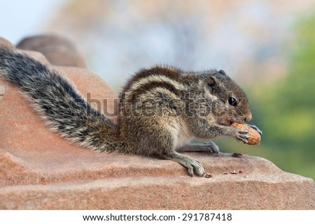 Chipmunk with nut on the blurred background - stock photo