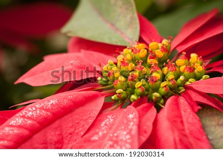 Chistmas star tree - stock photo