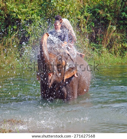 CHITWAN NATIONAL PARK, NEPAL - OCTOBER 27, 2008: A tourist is sprayed with water by the elephant on which he is seated, while taking part in bathing the elephants, which is done every evening.
