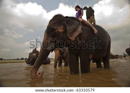 CHITWAN NATIONAL PARK, SAURAHA, NEPAL- CIRCA SEPTEMBER 2009: Unidentified riders on Asian Elephant (Proboscidea Elephas maximus) circa September 2009 in river in Chitwan National Park, Nepal. - stock photo