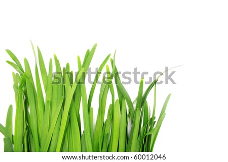 Chives isolated on white background - stock photo